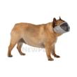 TRIXIE Textil hálós szájkosár rövid orrú kutyákra